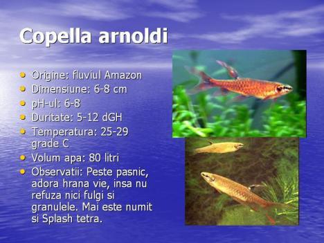 copella-arnoldi
