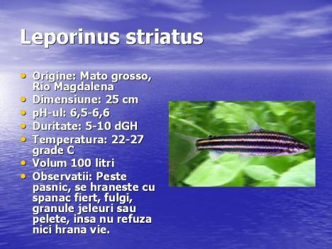 leporinus-striatus